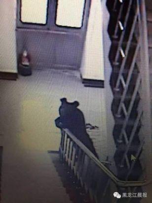 Cảnh sát bắn chết gấu đen xâm nhập một trường học - ảnh 1