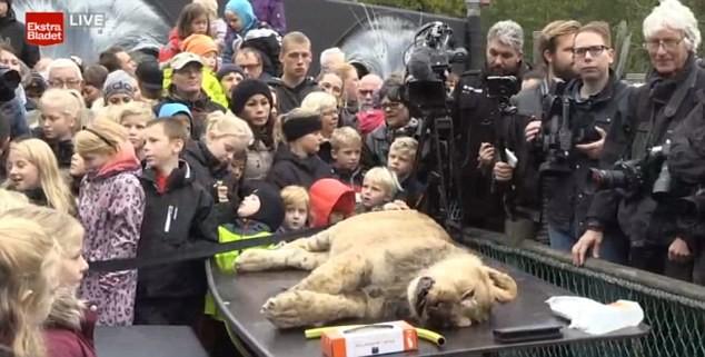 Trình diễn mổ sư tử 'rùng rợn' để... giáo dục trẻ em - ảnh 1