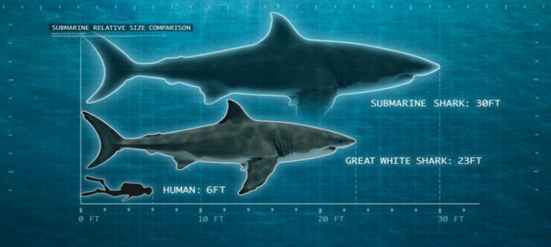 Phát hiện hóa thạch cá mập khổng lồ - ảnh 2
