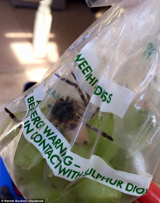 Hoảng hồn phát hiện 'thai phụ' nhện khổng lồ trong túi nho siêu thị - ảnh 1