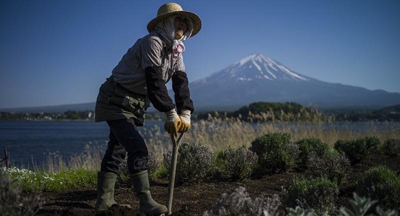 Nhật Bản dùng robot thay nông dân già để đảm bảo lương thực - ảnh 1
