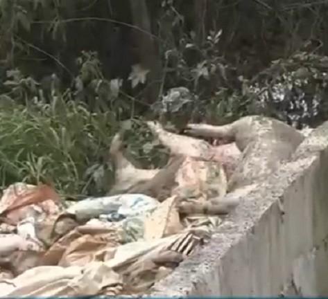 Hàng trăm xác heo chết bị vứt ra đầu nguồn sông Sài Gòn - ảnh 1