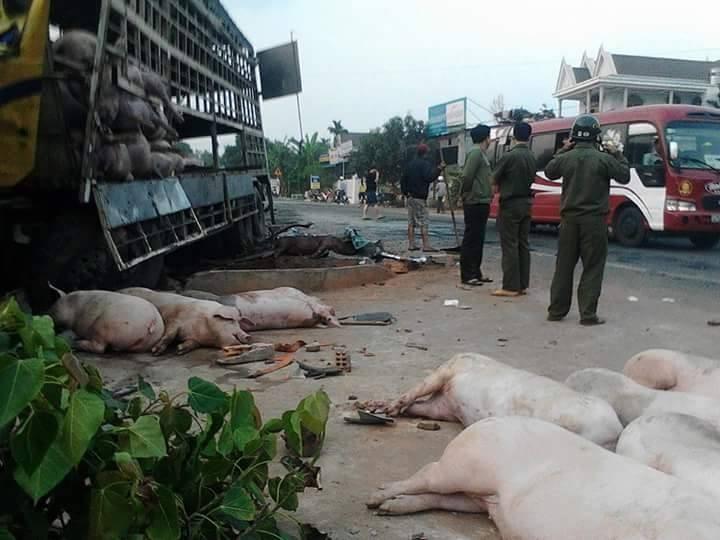 Chùm ảnh: Gần 100 chú heo nằm chết la liệt sau vụ tai nạn  - ảnh 3