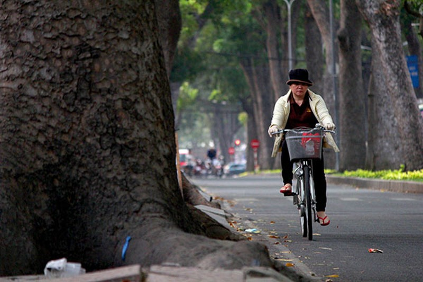 Ngắm hàng cây cổ thụ Sài Gòn trước giờ bị đốn hạ  - ảnh 5