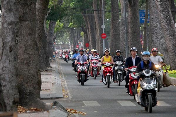 Ngắm hàng cây cổ thụ Sài Gòn trước giờ bị đốn hạ  - ảnh 2