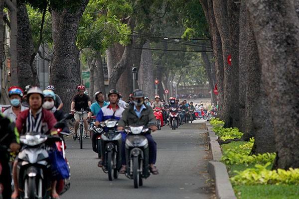 Ngắm hàng cây cổ thụ Sài Gòn trước giờ bị đốn hạ  - ảnh 3