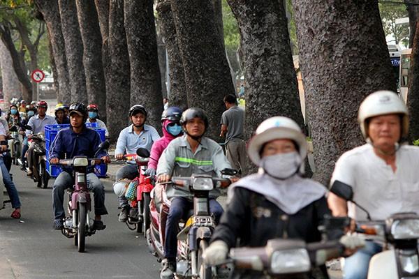 Ngắm hàng cây cổ thụ Sài Gòn trước giờ bị đốn hạ  - ảnh 4