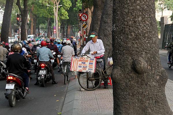 Ngắm hàng cây cổ thụ Sài Gòn trước giờ bị đốn hạ  - ảnh 13