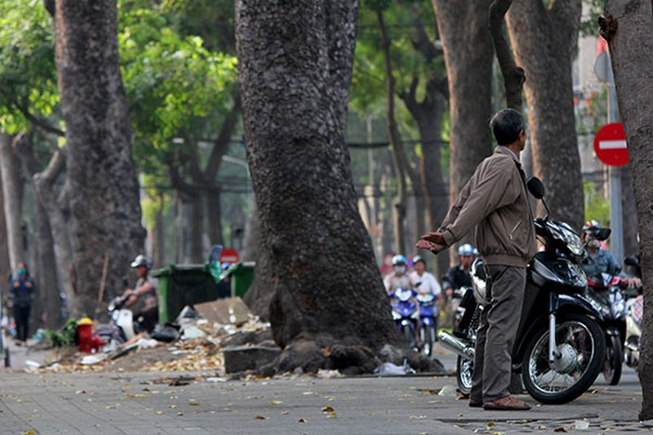 Ngắm hàng cây cổ thụ Sài Gòn trước giờ bị đốn hạ  - ảnh 14