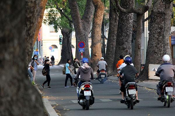 Ngắm hàng cây cổ thụ Sài Gòn trước giờ bị đốn hạ  - ảnh 11