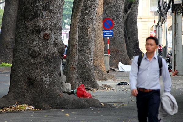 Ngắm hàng cây cổ thụ Sài Gòn trước giờ bị đốn hạ  - ảnh 10