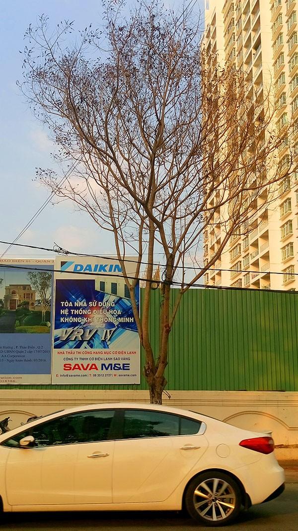 """Hàng loạt cây xanh ở TP.HCM """"chết đứng"""" - ảnh 14"""