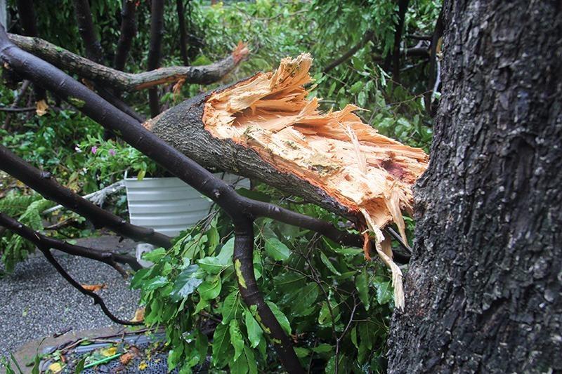 Một nhánh cây bị tét nằm chắn ngang đường. Ảnh: HOÀNG GIANG