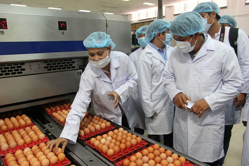 Mặt trận Tổ quốc đi giám sát an toàn thực phẩm  - ảnh 10
