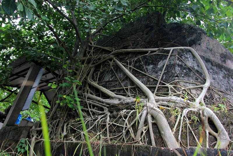 Chùm ảnh: Khu mộ cổ độc đáo gần 200 năm ở Gò Quéo  - ảnh 12