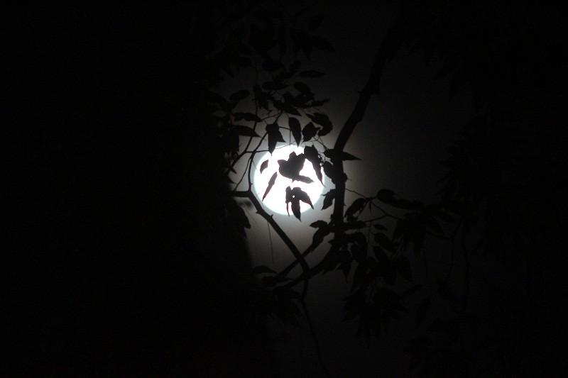 """Ngắm """"siêu trăng"""" sau 69 năm xuất hiện ở TP.HCM - ảnh 8"""