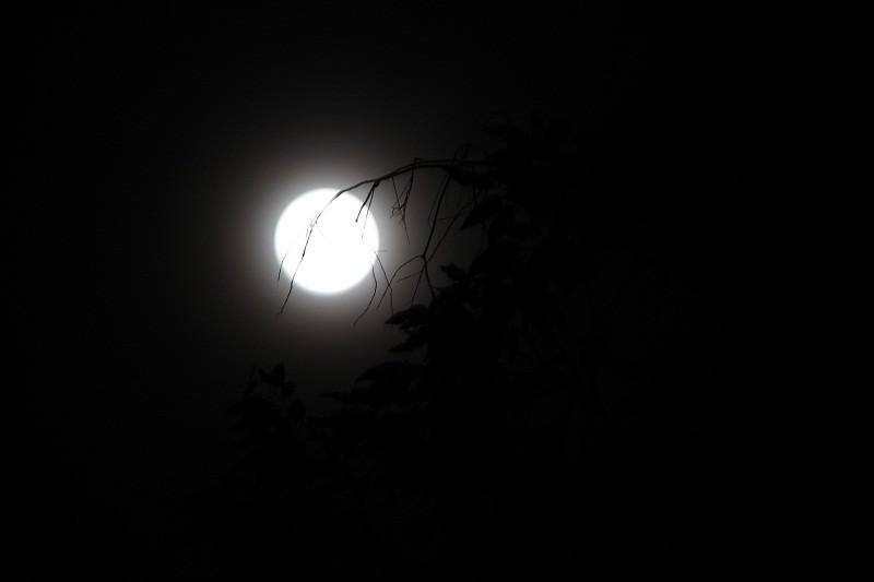 """Ngắm """"siêu trăng"""" sau 69 năm xuất hiện ở TP.HCM - ảnh 9"""
