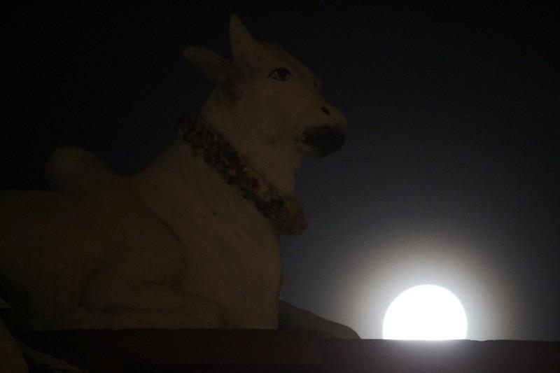 """Ngắm """"siêu trăng"""" sau 69 năm xuất hiện ở TP.HCM - ảnh 5"""