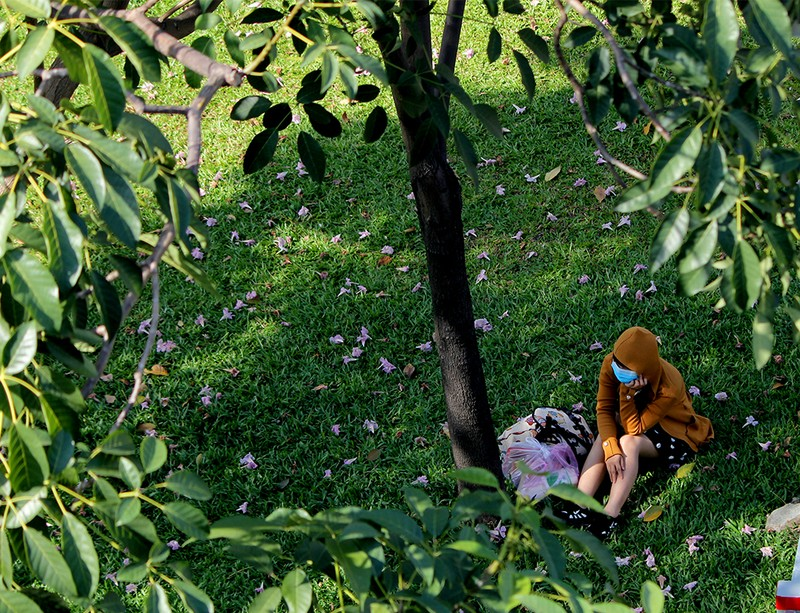 Ngất ngây với hoa kèn bên hầm Thủ Thiêm - ảnh 17