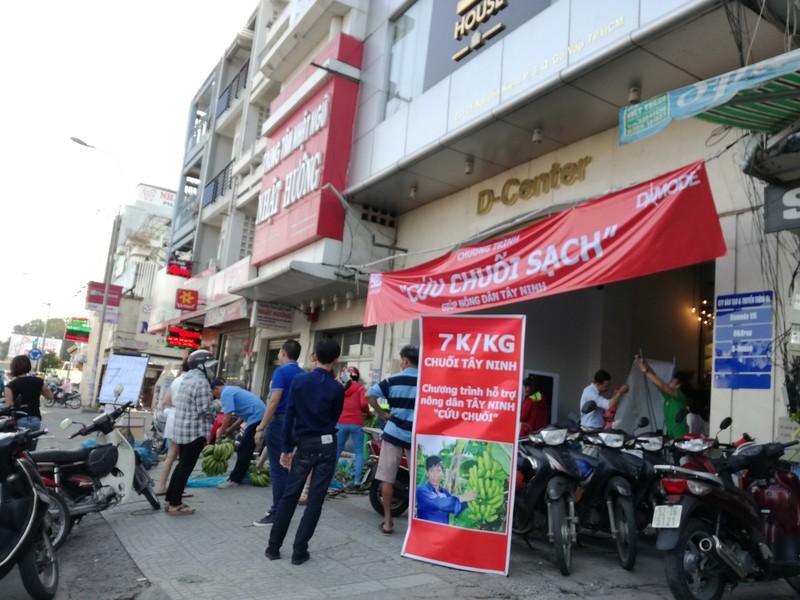 Sau Đồng Nai, người Sài Gòn ra tay cứu chuối Tây Ninh - ảnh 1