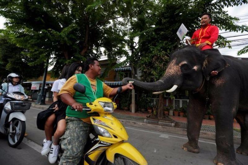 Chính phủ quân sự Thái Lan dùng voi phát tờ rơi về cuộc trưng cầu dân ý cho dân.