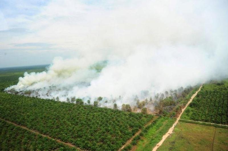 Cháy rừng ở Indonesia ngày 25-8.