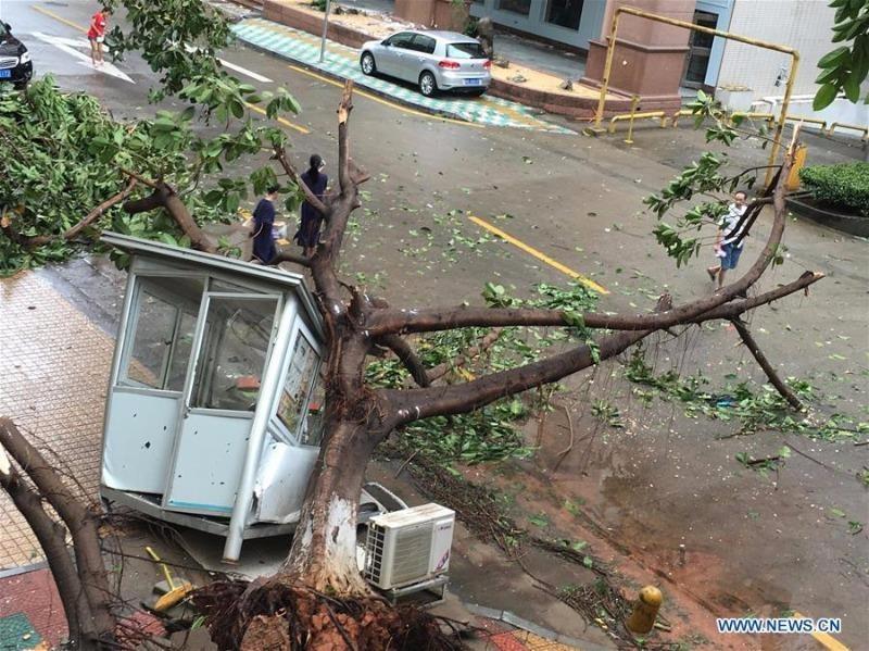 Siêu bão Meranti giật ngã cây cối ở TP Hạ Môn, tỉnh Phúc Kiến (Trung Quốc) ngày 15-9.
