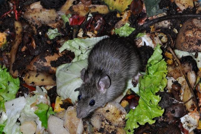 15% dân Venezuela phải lục thùng rác tìm thức ăn thừa sống qua ngày.