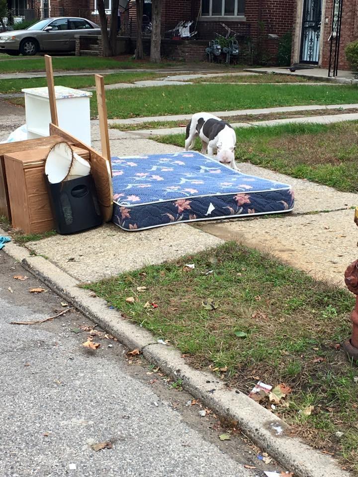 Chú chó Boo bị chủ bỏ rơi sau khi gia đình bị trục xuất.