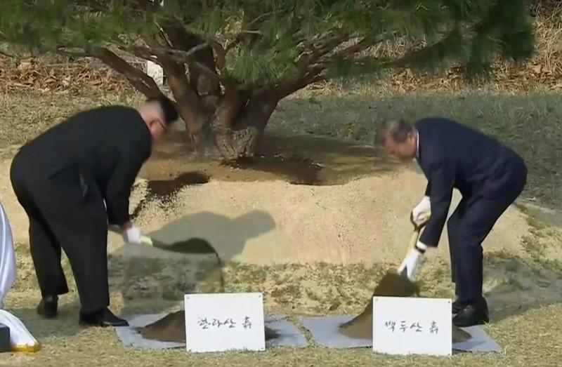 Tổng thống Hàn Quốc Moon Jae-in (phải) bồi đất lấy từ núi Baekdu ở Triều Tiên, và lãnh đạo Triều Tiên Kim Jong-un bồi đất lấy từ núi Halla ở Hàn Quốc vào cây thông mọc từ năm 1953 ở đường phân giới quân sự liên Triều chiều 27-4. Ảnh: REUTERS
