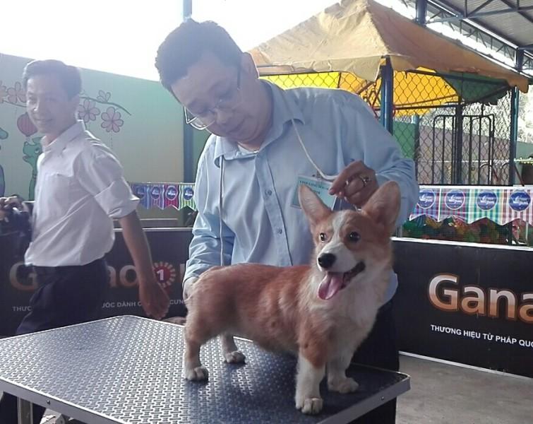 Lần đầu tiên miền Tây tổ chức thi nhan sắc cho chó - ảnh 7