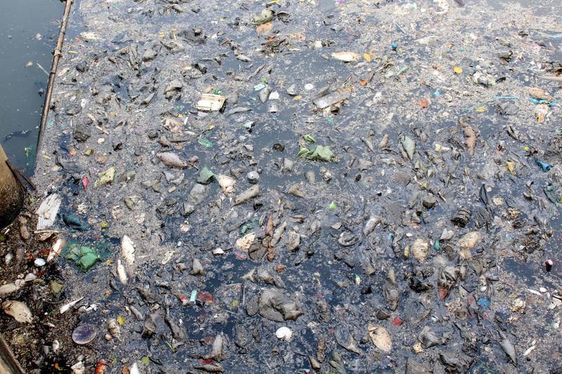 Sáng còn ngoi ngóp, chiều cá đã chết trắng xóa kênh Nhiêu Lộc  - ảnh 1