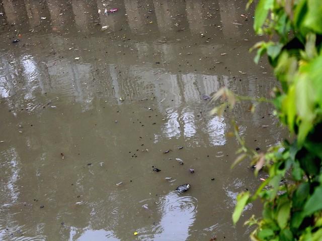 Rác thải đen ngòm tràn ngập mặt kênh - Ảnh: Hồng Trâm