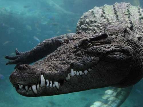 Bà mẹ quyết chiến với cá sấu, giải cứu con - ảnh 2