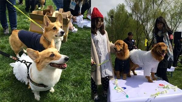 Đám cưới tập thể dành cho những chú chó cưng - ảnh 3