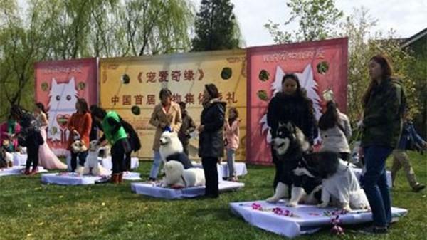 Đám cưới tập thể dành cho những chú chó cưng - ảnh 4
