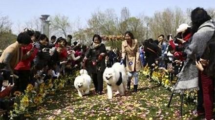 Đám cưới tập thể dành cho những chú chó cưng - ảnh 1