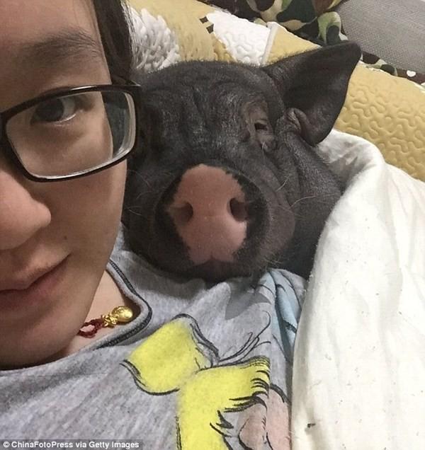Chồng ghen tỵ vì vợ suốt ngày ăn ngủ với... lợn cưng - ảnh 2