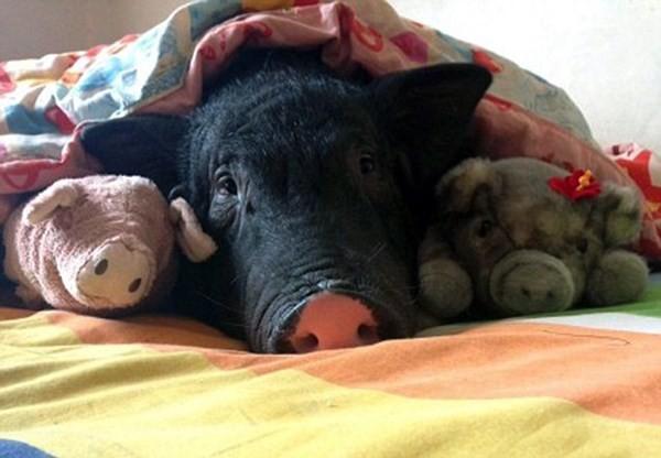Chồng ghen tỵ vì vợ suốt ngày ăn ngủ với... lợn cưng - ảnh 3
