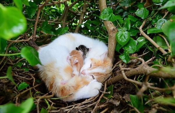 Kỳ lạ mèo đẻ con trong chiếc tổ chim trên cây - ảnh 1