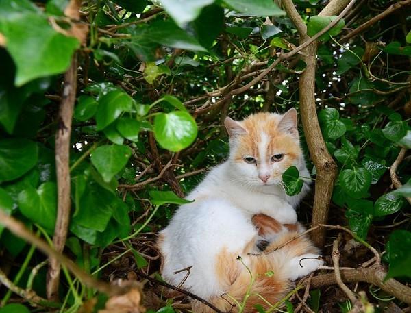 Kỳ lạ mèo đẻ con trong chiếc tổ chim trên cây - ảnh 2