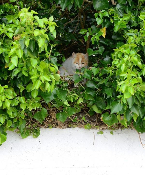 Kỳ lạ mèo đẻ con trong chiếc tổ chim trên cây - ảnh 3
