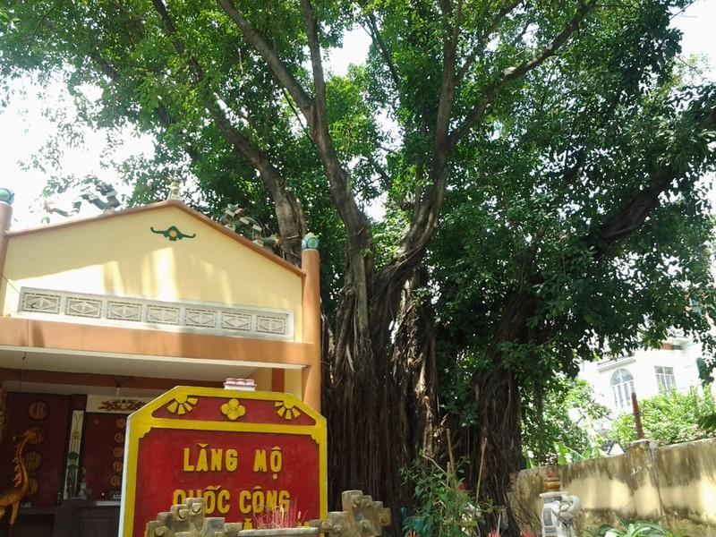 Những 'cụ' cây trăm tuổi ở Biên Hòa - ảnh 3