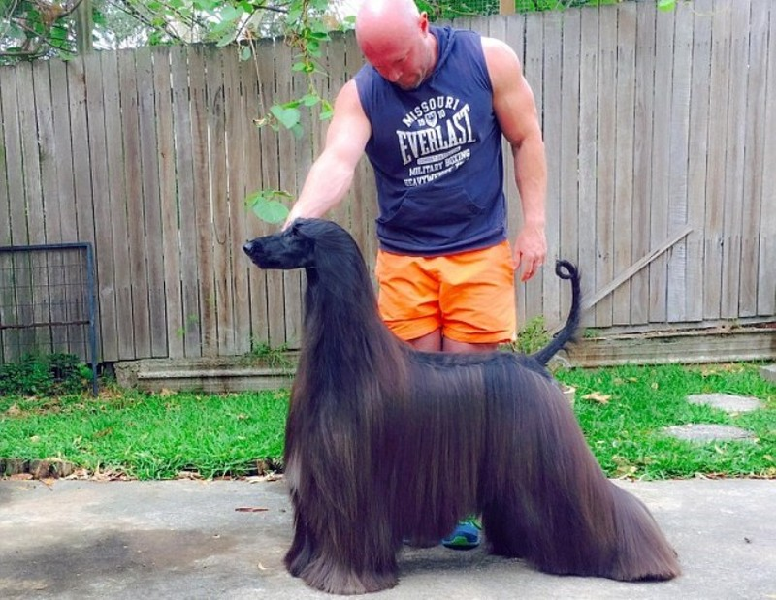'Siêu mẫu chó' gây sốt với bộ lông dài óng ả - ảnh 2