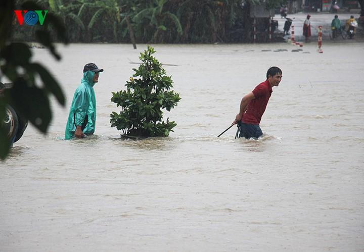 Người dân Bình Định 'vật lộn' trong lũ để cứu mai - ảnh 1