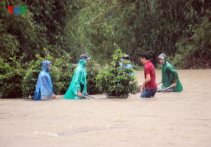 Người dân Bình Định 'vật lộn' trong lũ để cứu mai - ảnh 4