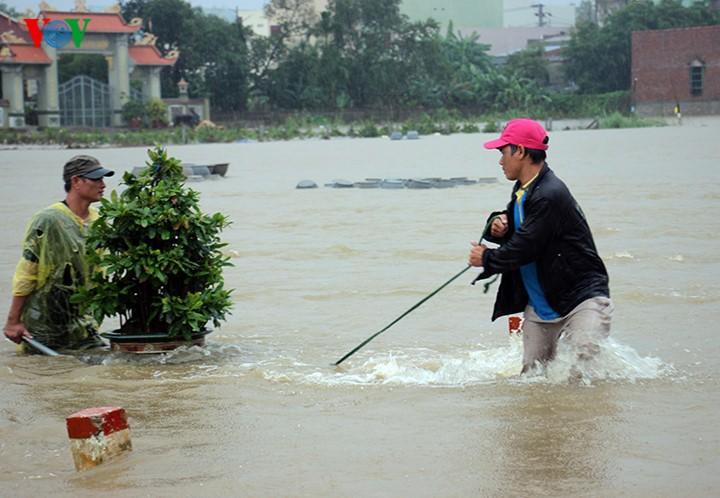 Người dân Bình Định 'vật lộn' trong lũ để cứu mai - ảnh 5