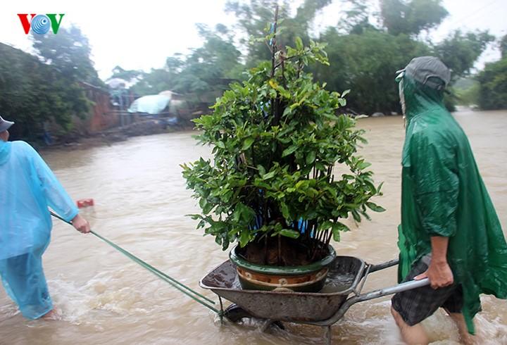 Người dân Bình Định 'vật lộn' trong lũ để cứu mai - ảnh 6