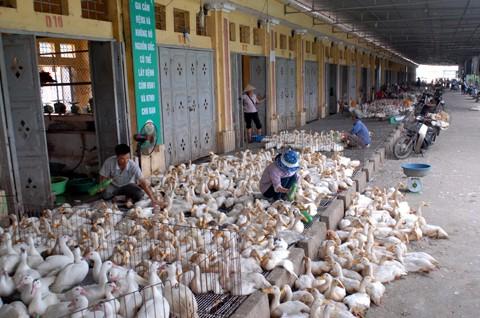 Lo ngại dịch cúm tràn vào Việt Nam - ảnh 1