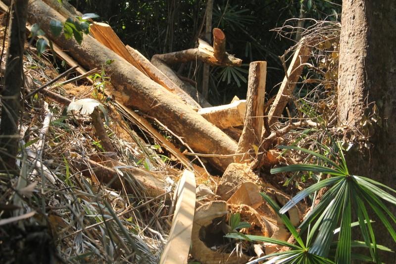 Vụ phá rừng phòng hộ: Xử lý nghiêm - ảnh 2
